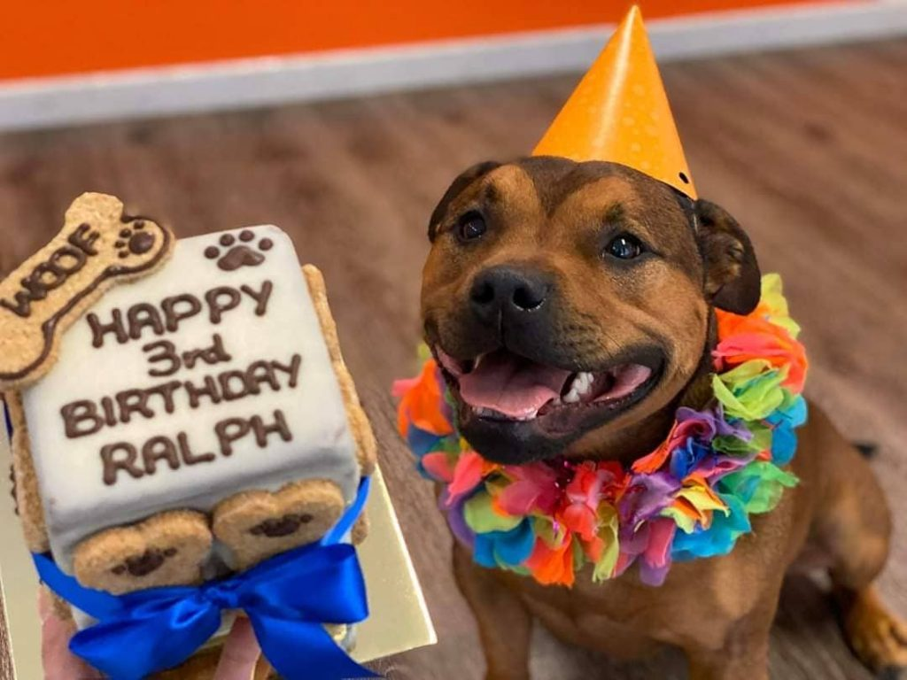 Spoil Your Furry Friend Rotten With Treats From This Barking Dog Bakery • The Woofery